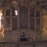 orgel Floh